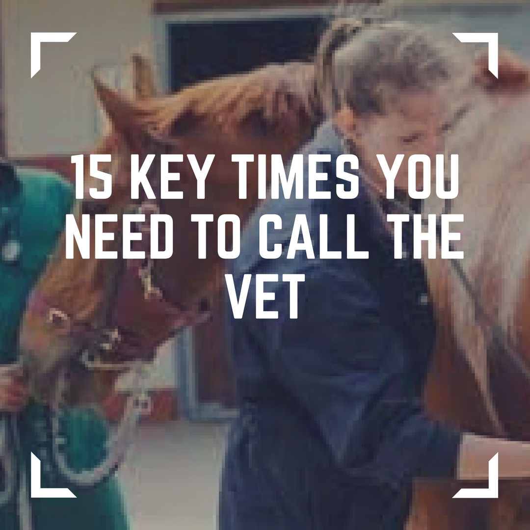 15 key times you need to call the vet   copy