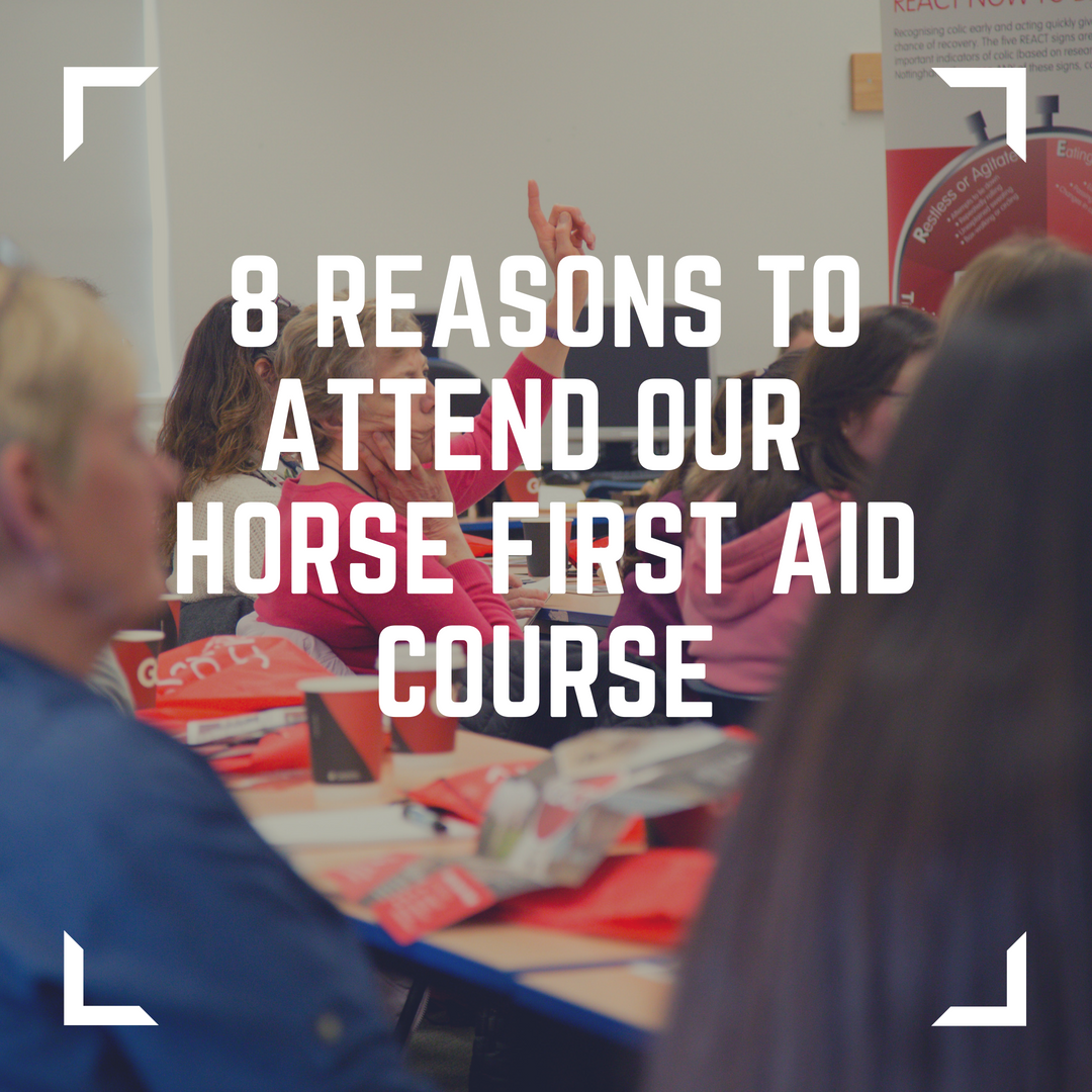 8 reasons to attend our horse first aid course