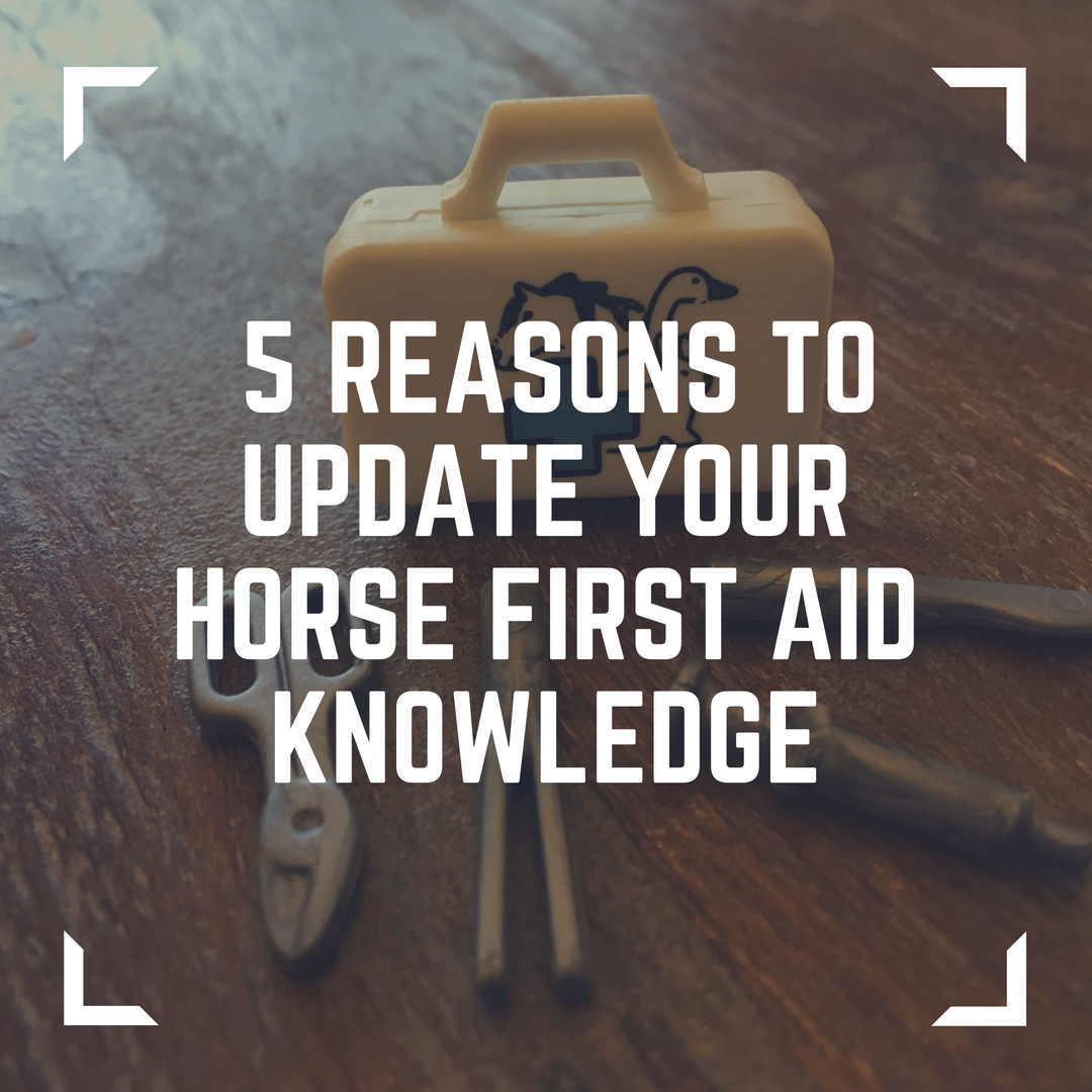 5 reasons to update your horse first aid knowledge   copy
